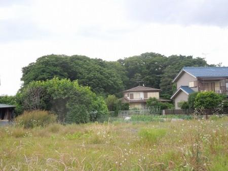 柏木家の屋敷林の全景