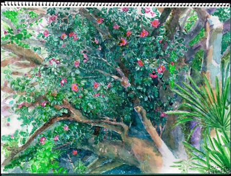 水彩画・東禅寺のツバキ ©大貫伸樹 (禁無断転載 クリックで拡大)