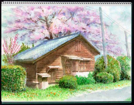 水彩画・東京大学田無農場孵卵室©大貫伸樹 (禁無断転載 クリックで拡大)