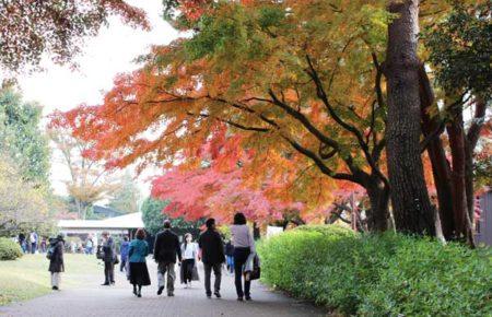 広い構内に紅葉の通り