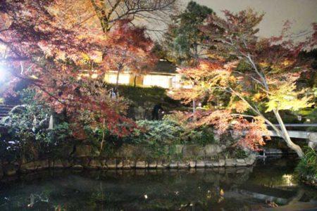 ライトアップされた紅葉が光る(向山庭園)