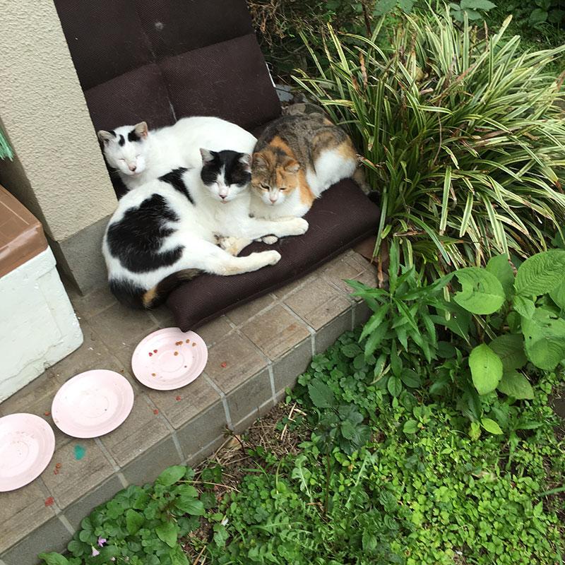 ネコの探索日和 レシピ