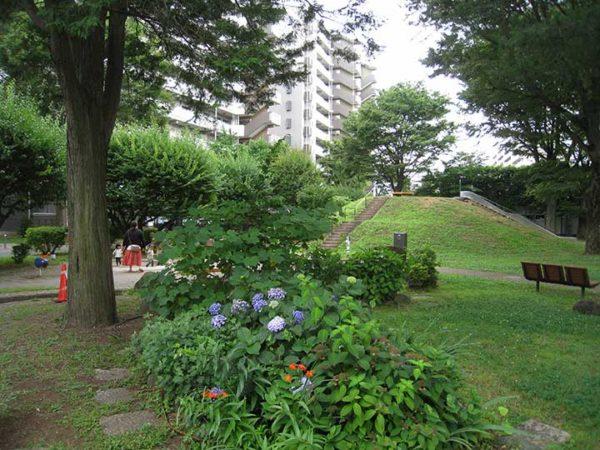 ひばりが丘団地の草花